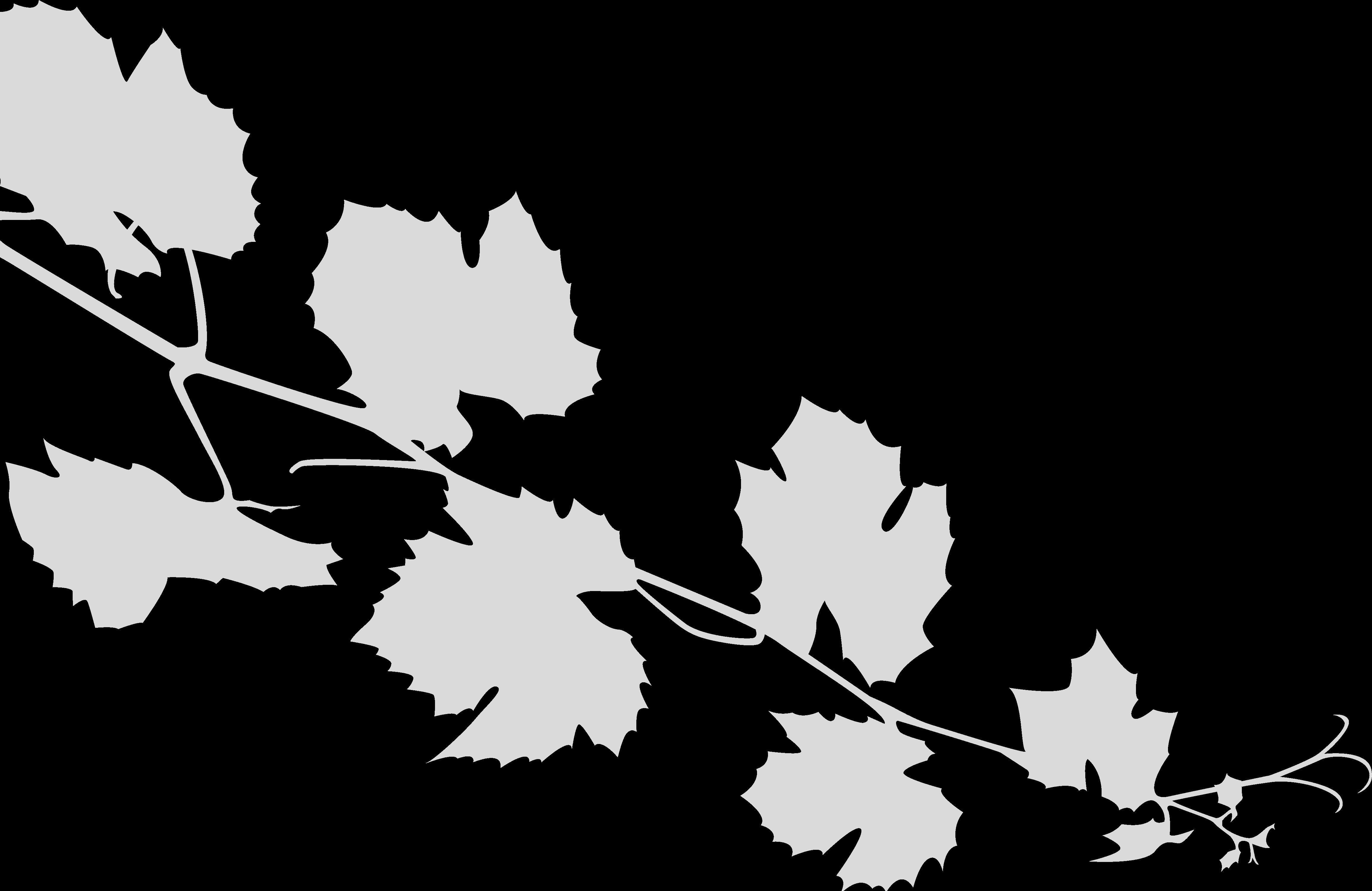 Rameau de vin gris