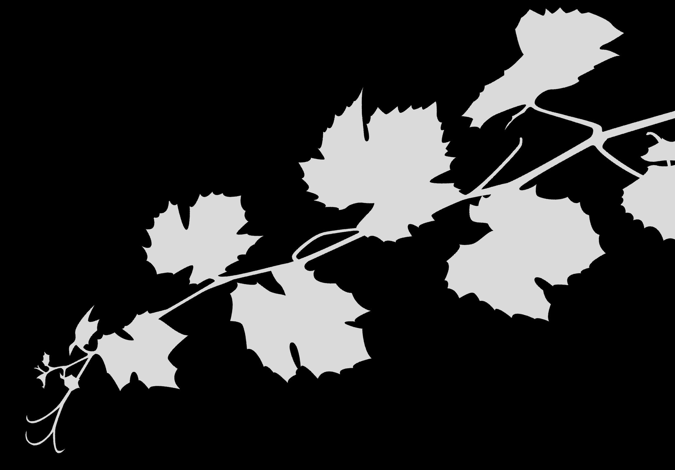 Rameau de vin gris inversé